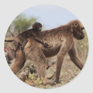 Female gelada baboon with a baby classic round sticker