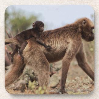 Female gelada baboon with a baby coaster