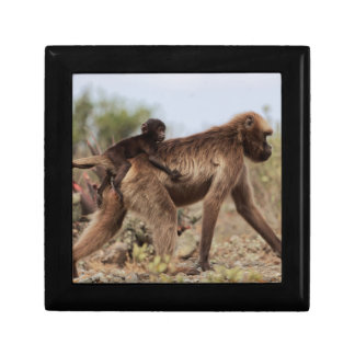 Female gelada baboon with a baby gift box