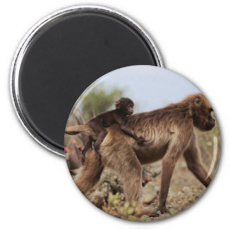 Female gelada baboon with a baby magnet