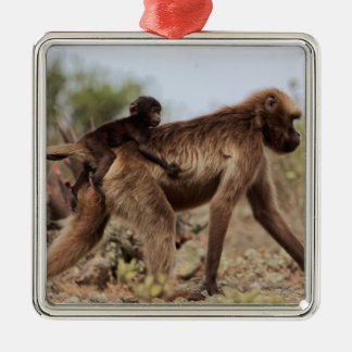 Female gelada baboon with a baby metal ornament