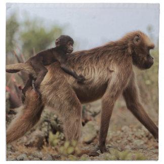 Female gelada baboon with a baby napkin