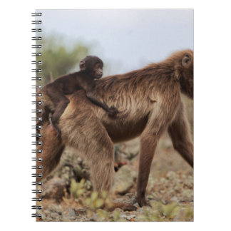 Female gelada baboon with a baby notebook