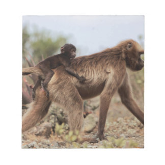 Female gelada baboon with a baby notepad