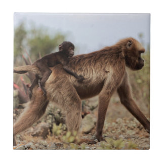 Female gelada baboon with a baby tile