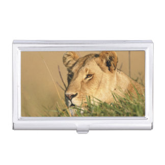 Female Lion Business Card Holders