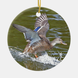 Female Mallard Coming In For Landing Ceramic Ornament