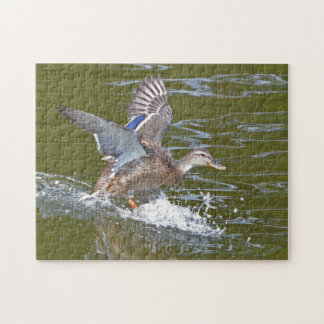Female Mallard Coming In For Landing Jigsaw Puzzle