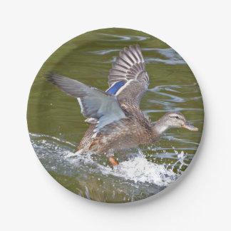 Female Mallard Coming In For Landing Paper Plate