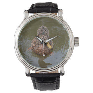 female mallard duck facing front watch