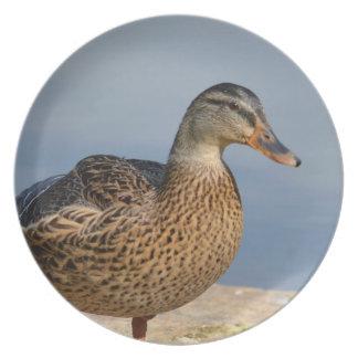 Female Mallard Duck Party Plate