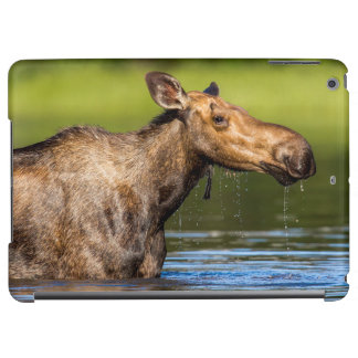 Female Moose Feeding In Small Lake Case For iPad Air