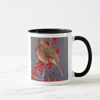 Female Northern Cardinal among hawthorn Mug