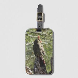 Female Northern Cardinal Luggage Tag