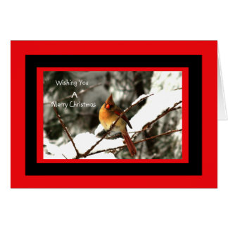 Female Northern Cardinal Sitting On Snowy Tree Card