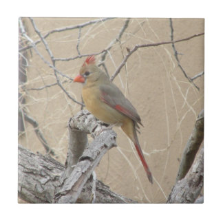 Female Northern Cardinal Tile