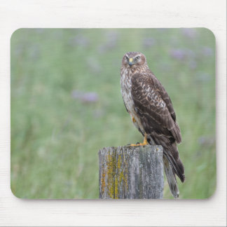 Female Northern Harrier Mouse Pad
