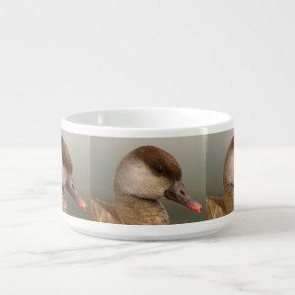 Female pochard duck, netta rufina bowl
