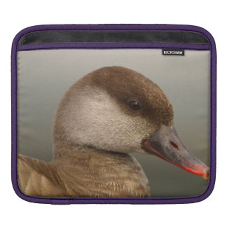 Female pochard duck, netta rufina iPad sleeve