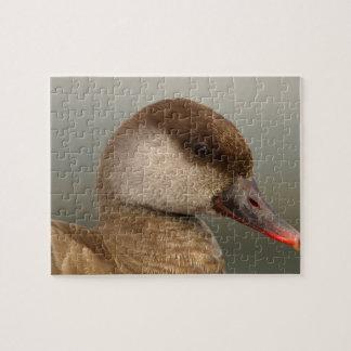 Female pochard duck, netta rufina jigsaw puzzle