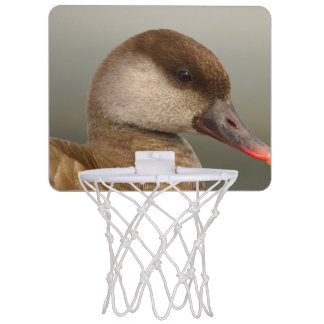 Female pochard duck, netta rufina mini basketball hoop