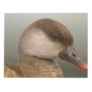 Female pochard duck, netta rufina notepads