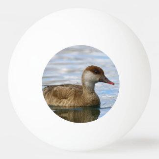 Female pochard duck, netta rufina ping pong ball