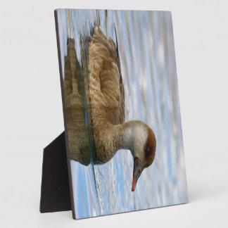 Female pochard duck, netta rufina plaque
