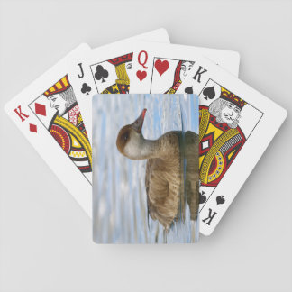 Female pochard duck, netta rufina playing cards