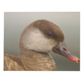 Female pochard duck, netta rufina, portrait notepad