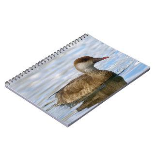 Female pochard duck, netta rufina spiral notebook