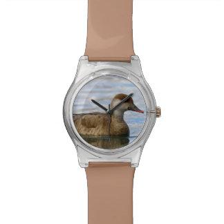 Female pochard duck, netta rufina watch