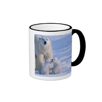 Female Polar Bear Standing with 2 Cubs at her Mugs