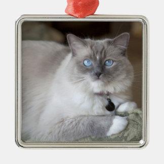 Female Ragdoll Cat Silver-Colored Square Ornament
