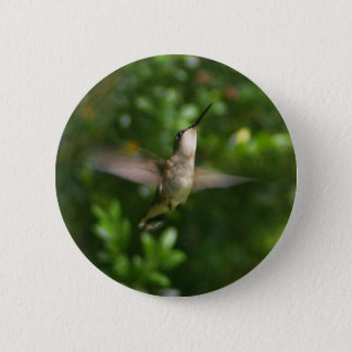 Female Ruby Throat Hummingbird Button
