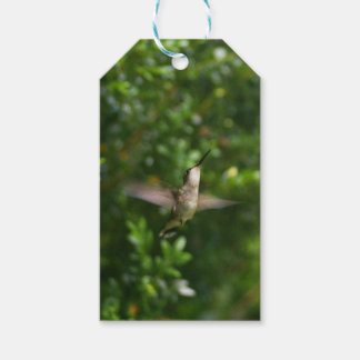 Female Ruby Throat Hummingbird gift tag Pack Of Gift Tags