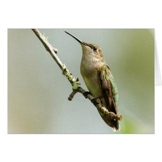 Female Ruby-throated Hummingbird Card