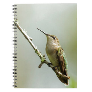 Female Ruby-throated Hummingbird Notebook