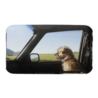 Female Terrier X sitting if front seat of iPhone 3 Case
