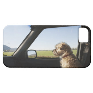 Female Terrier X sitting if front seat of iPhone 5 Cases