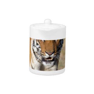 Female Tigress Stalking Prey