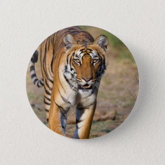 Female Tigress Stalking Prey 2 Inch Round Button