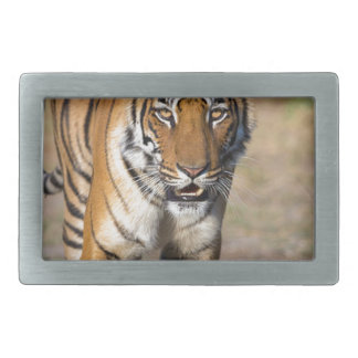 Female Tigress Stalking Prey Belt Buckle