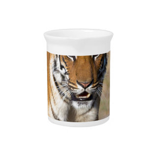 Female Tigress Stalking Prey Drink Pitchers