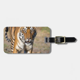 Female Tigress Stalking Prey Luggage Tag
