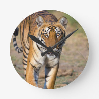 Female Tigress Stalking Prey Round Clock