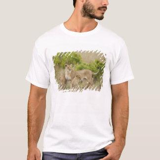 Femelle adulte de lion africain avec des petits t-shirt