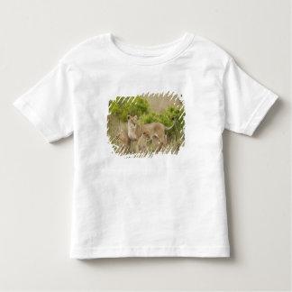 Femelle adulte de lion africain avec des petits t-shirt pour les tous petits