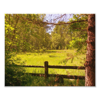 Fence at Oaks Bottom Photographic Print