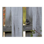 Fence Junco Postcard
